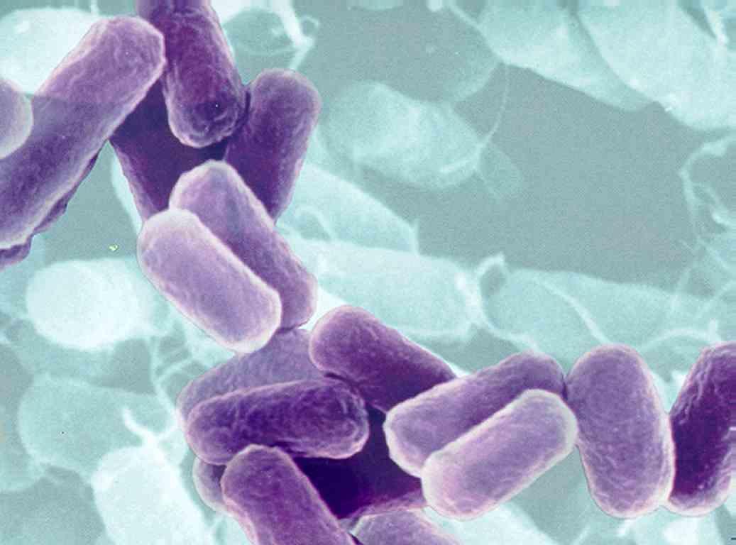 анализы обнаружение паразитов в организме человека